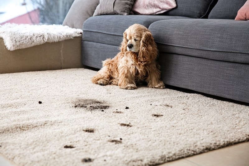 Carpet-And-Tile-Cleaning-Mercer-Island-WA