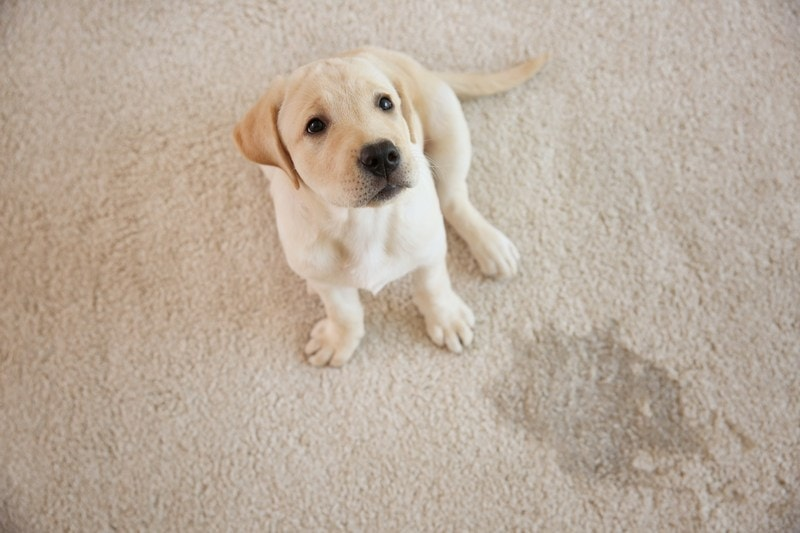 Carpet-Cleaning-Clyde-Hill-WA